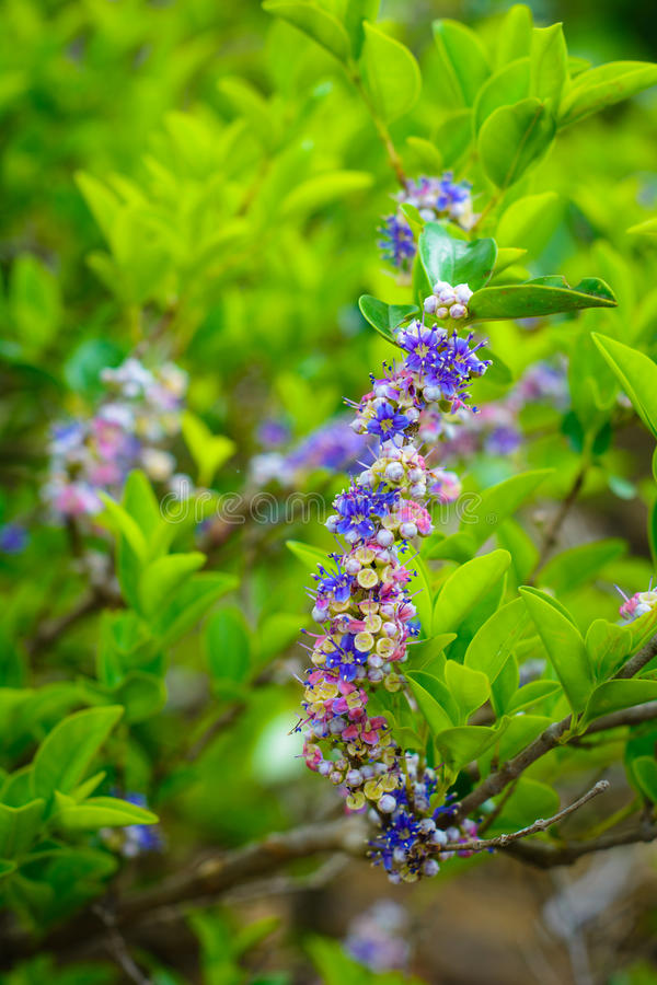 Bunte Blumen lizenzfreies stockfoto