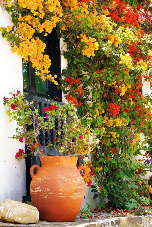 Download Bunte Blumen auf Gebäude stockfoto. Bild von weiß, flora - 9076766