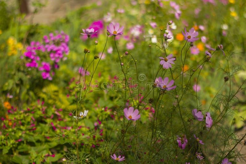 Bunte Blumen des Sommers an einem sonnigen Tag lizenzfreie stockbilder