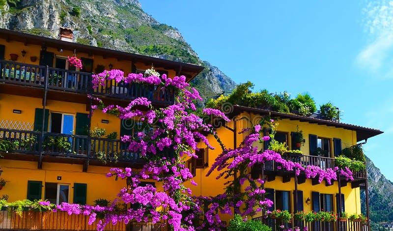 Bunte Blumen, die alte Häuser, Limone-sul Garda, See Garda, Italien verzieren Limone-sul Garda, regione Lombardia, Italien lizenzfreie stockbilder