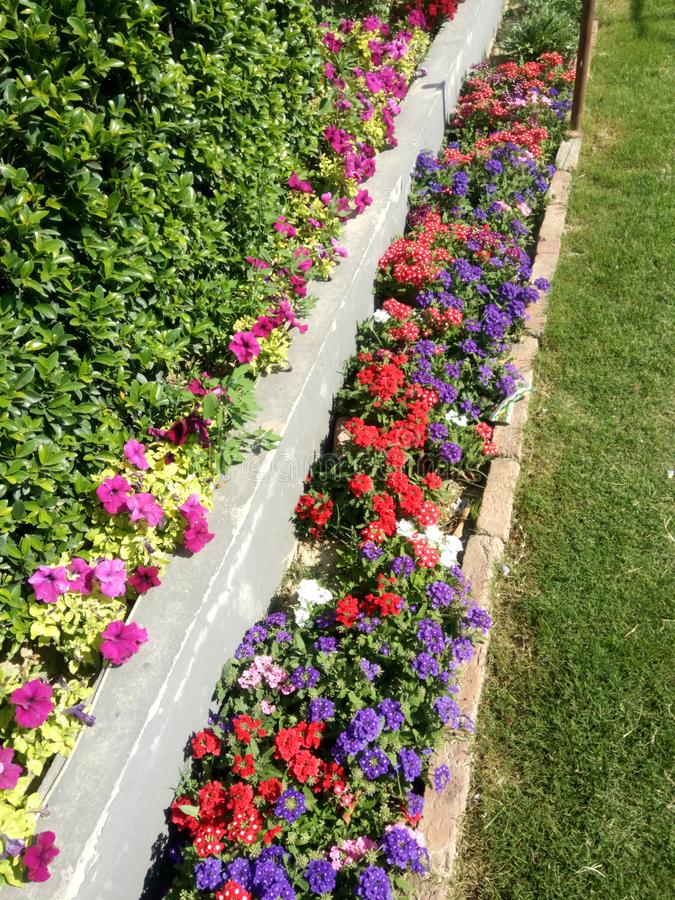 Bunte Blumen, die Ansicht Überraschen machen lizenzfreies stockfoto