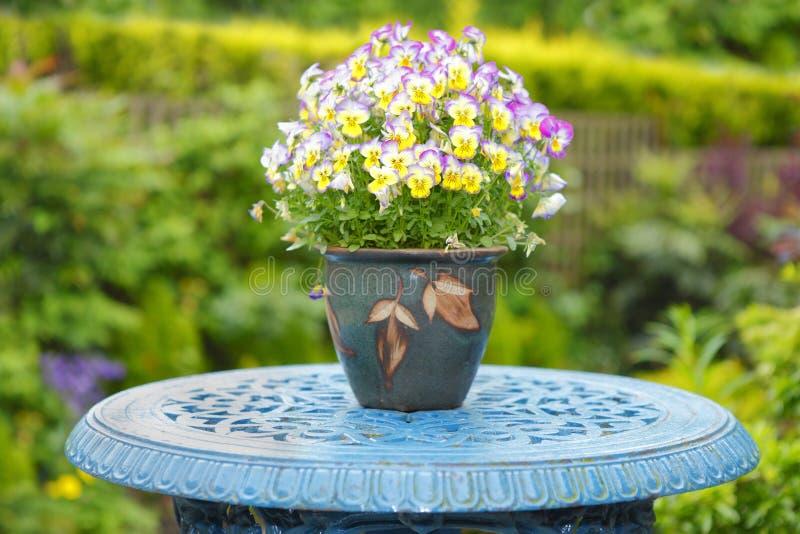 Bunte Blumen in ein Topf Pansies lizenzfreie stockbilder