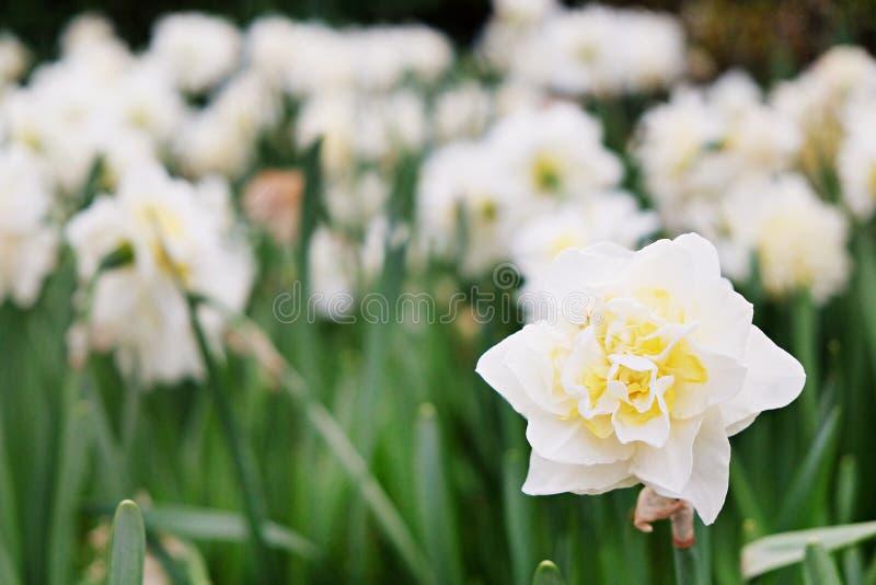 Bunte Blumen gepflanzt im Park zur Frühlingszeit lizenzfreie stockbilder