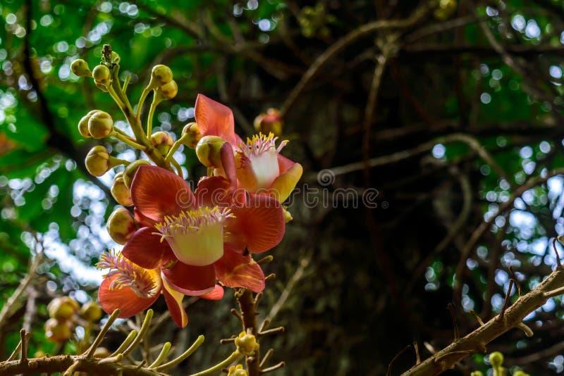 Bunte Blumen, vorgewählter Fokus stockfoto