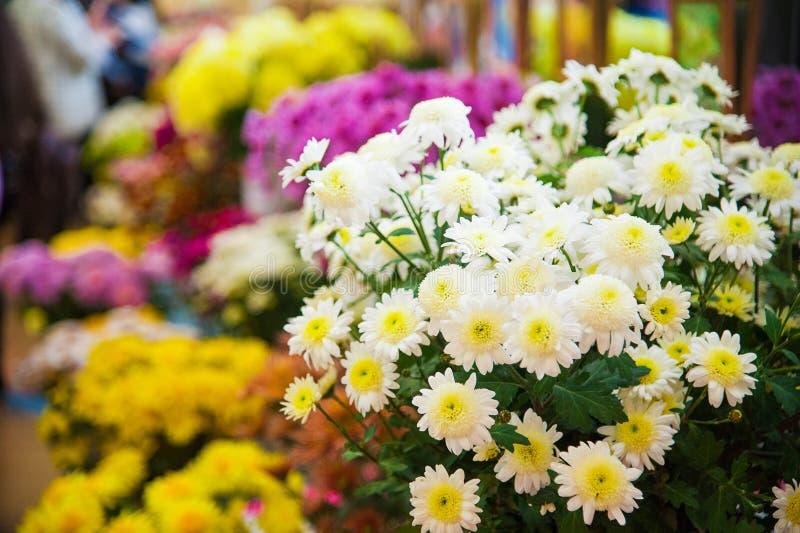 Bunte Chrysantheme für Verkauf stockfotografie
