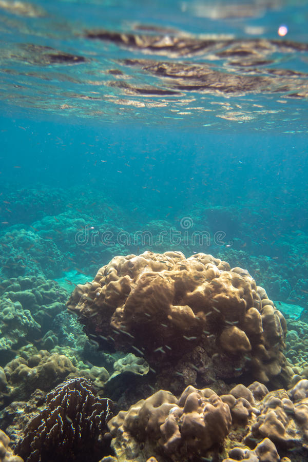 Bunte Coral Reef in Lipe-Insel in Thailand stockfotos