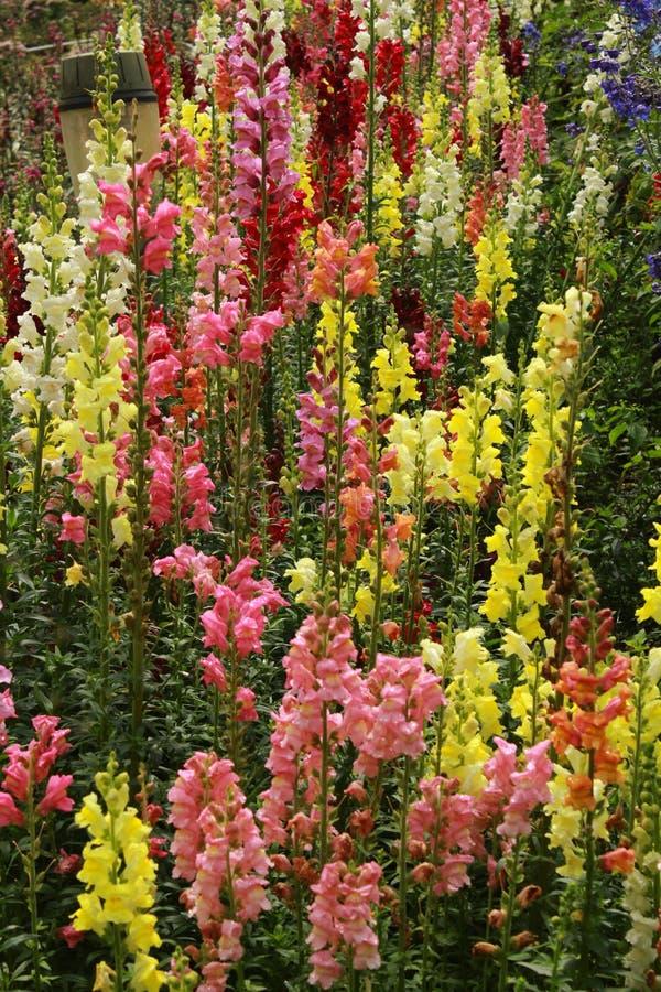 Bunte dekorative Gartenblumen und -knospen im Bryant parken, kodaikanal lizenzfreies stockfoto