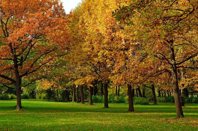 Bunte Eichenbäume des Herbstes stockbild