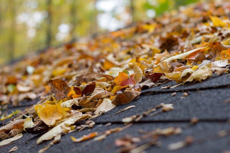 Bunte Fall-Blätter auf Schindel-Dach während des Herbstes stockbild