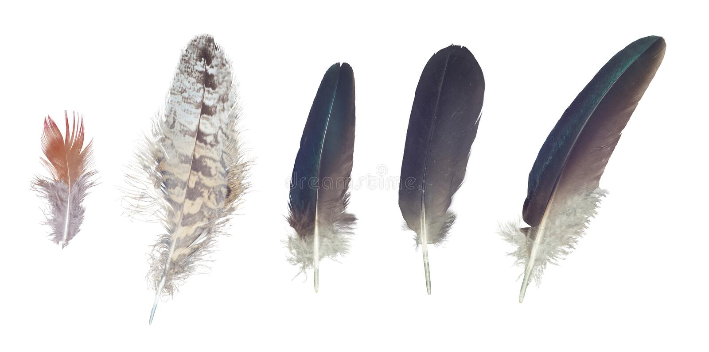Bunte Federn Sammlung, Satz von den gelegentlichen Vögeln lizenzfreie stockfotografie