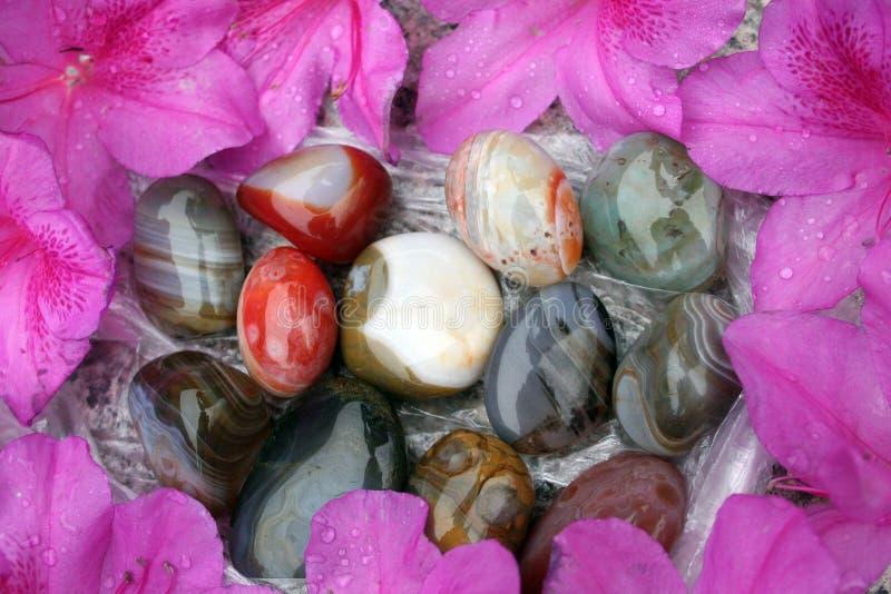 Bunte Felsen und Pedale umgeben durch purpurrote Blumenblumenblätter lizenzfreie stockfotos
