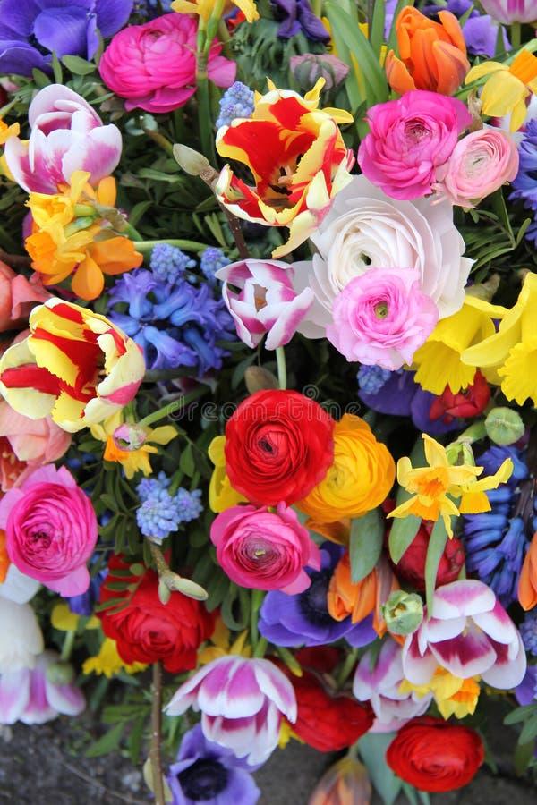 Bunte Frühlings-Blumen lizenzfreie stockfotos