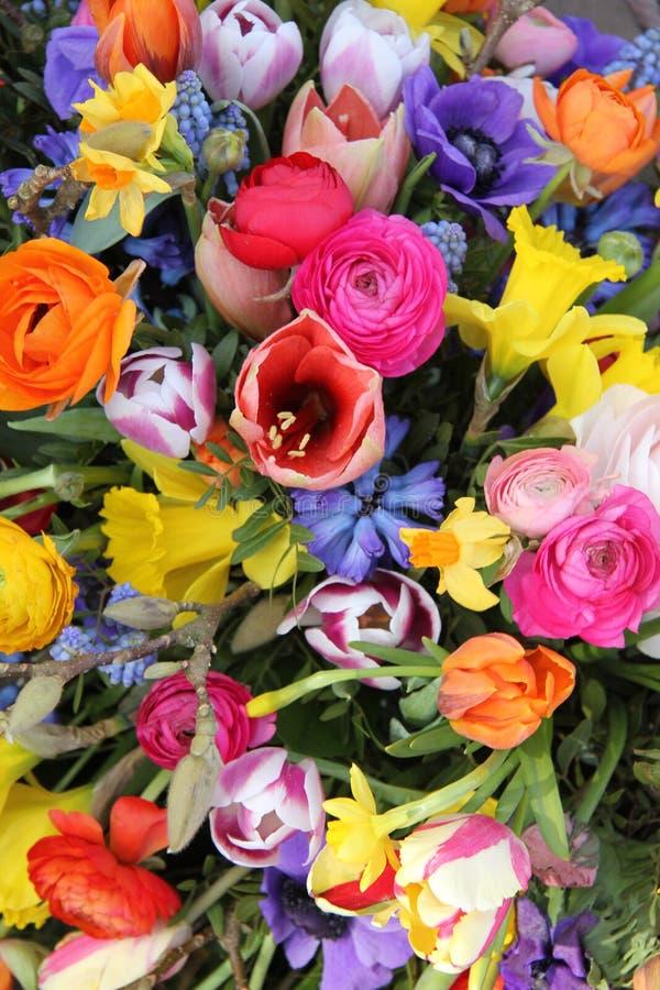 Bunte Frühlings-Blumen stockbild