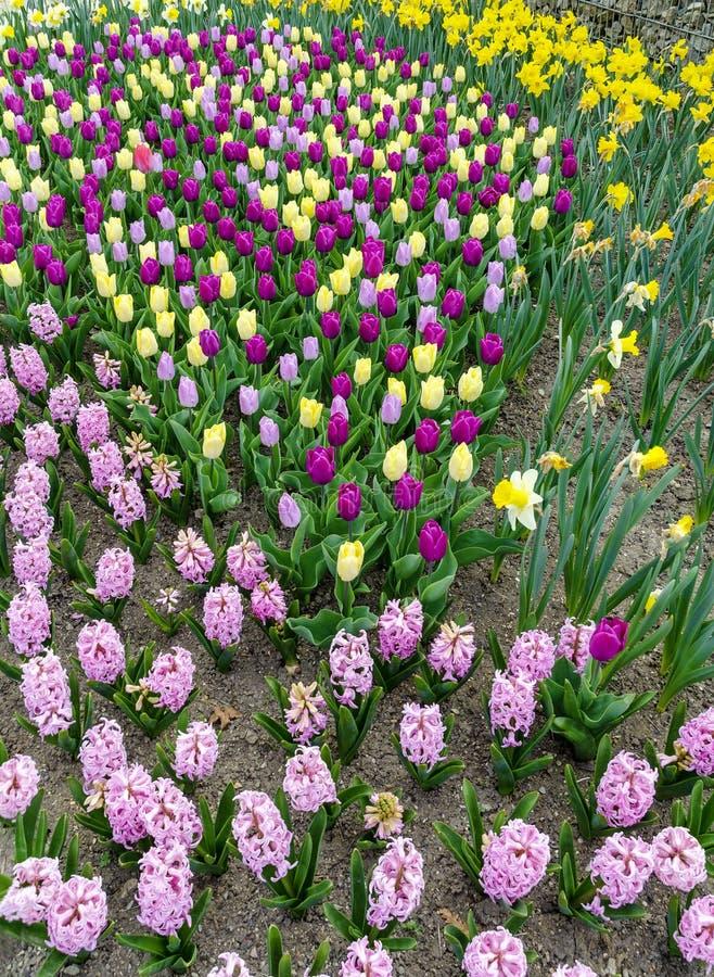 Bunte Fr?hlings-Blumen stockbild