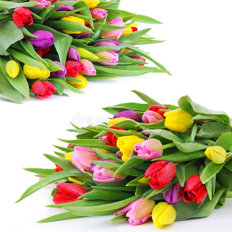 Frühlingstulpeblumen lizenzfreies stockbild