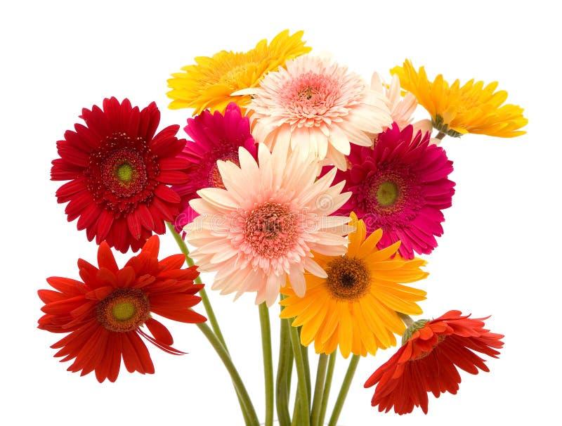 Bunte Gänseblümchenblumen lizenzfreies stockbild
