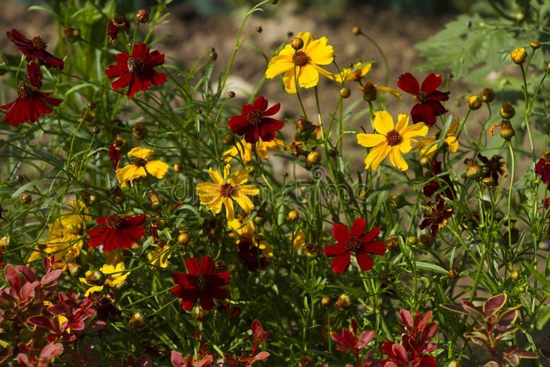 Bunte Gartenblumen stockfotografie
