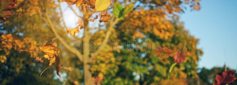 Bunte gefallene Blätter von Bäumen im Herbstsaisonwald mit bokeh des Waldes stockbild