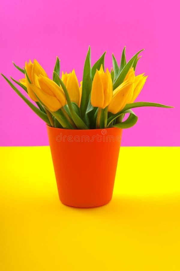 Bunte gelbe Tulpen lizenzfreie stockbilder