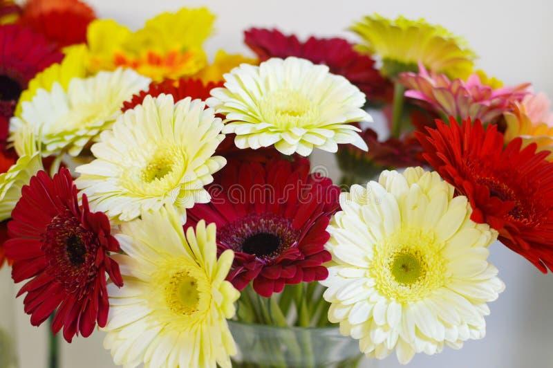 Bunte Gerberas im Salon von Blumen stockfotos