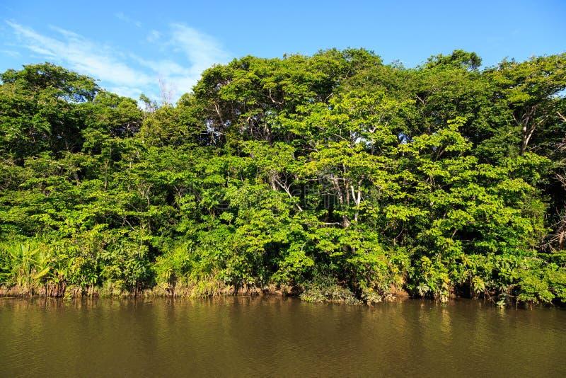 Bunte grüne Bäume auf den Banken von einem Fluss beleuchteten durch die Sonne stockfotos