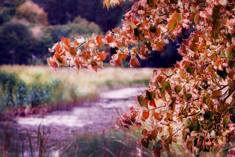 Bunte hölzerne Blätter stockfoto