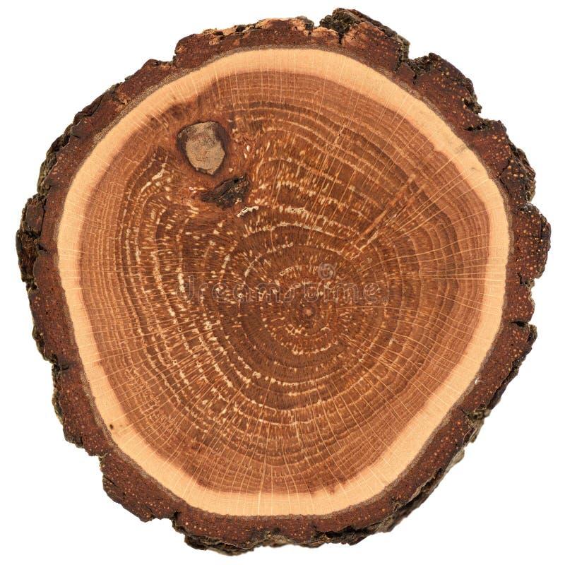 Bunte hölzerne Platte mit Barken- und Wachstumsringen Kleine Eichenscheibenbeschaffenheit lokalisiert auf weißem Hintergrund stockfotos