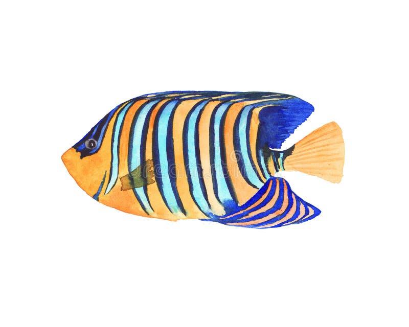 Bunte helle tropische Fische des Handgezogenen Aquarells lokalisierten stock abbildung