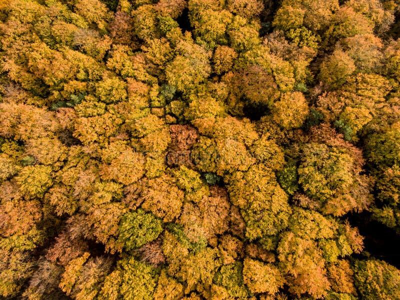 Bunte Herbst-Bäume stockfotografie