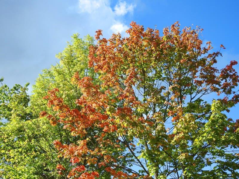 Bunte Herbstbäume stockbilder