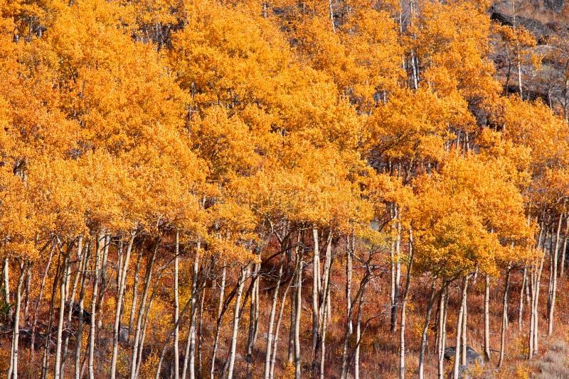 Bunte Herbstbäume lizenzfreies stockfoto