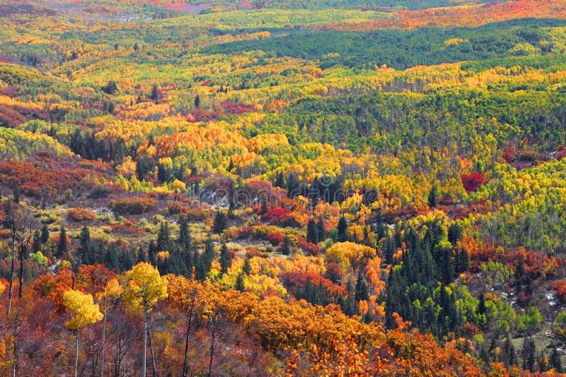 Bunte Herbstbäume lizenzfreie stockbilder