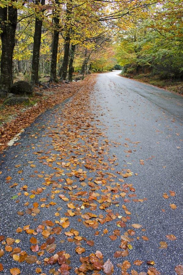 Bunte Herbstbäume auf einer kurvenreichen Straße stockfotografie