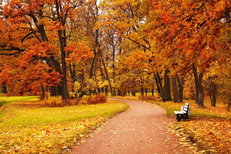 Bunte Herbstbäume im Park stockfotografie
