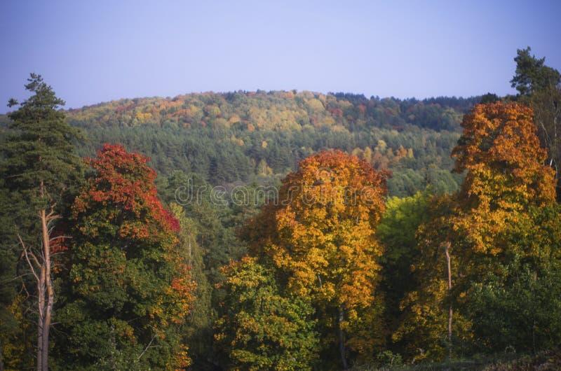 Bunte Herbstbäume, Litauen stockfotos