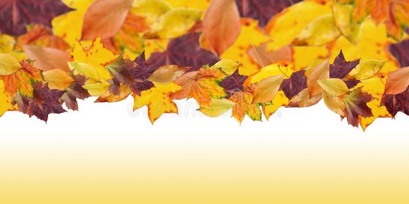 Bunte Herbstblätter lizenzfreie stockfotos