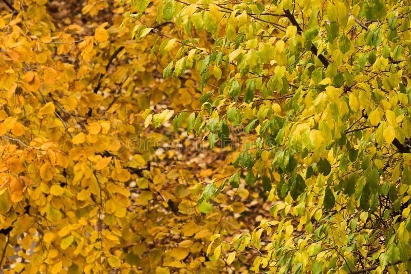 Bunte Herbstblätter auf Bäumen lizenzfreies stockbild