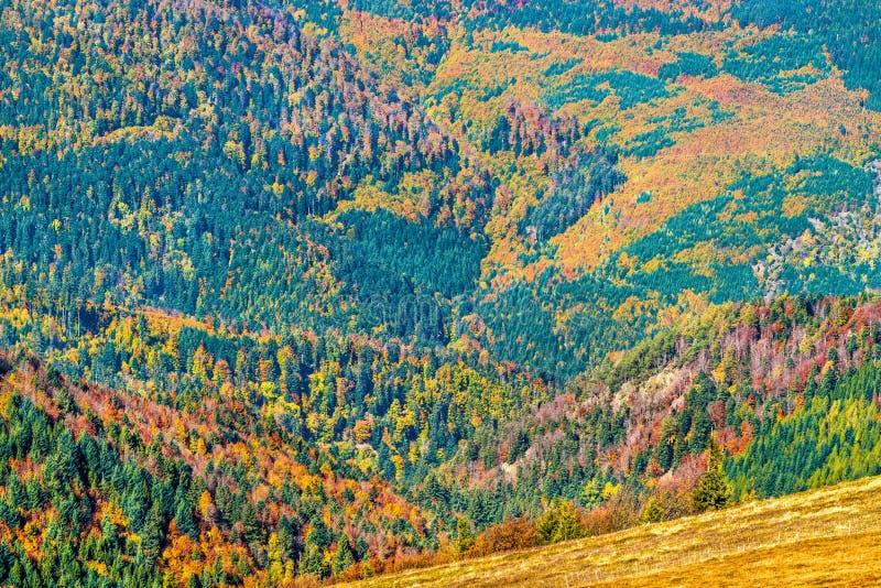 Bunte Herbstlandschaft der Vosges-Berge in Elsass, Frankreich stockbild