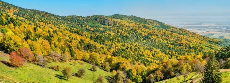 Bunte Herbstlandschaft der Vosges-Berge in Elsass, Frankreich stockfoto