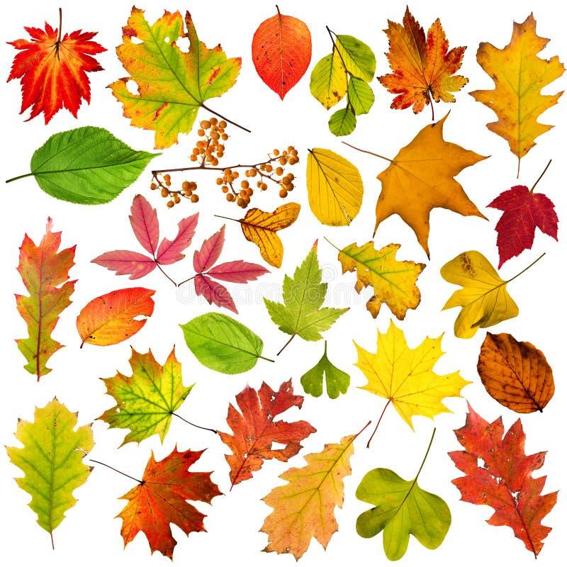 Bunte herbstliche Blätter Sammlung, Nahaufnahme stockfotos