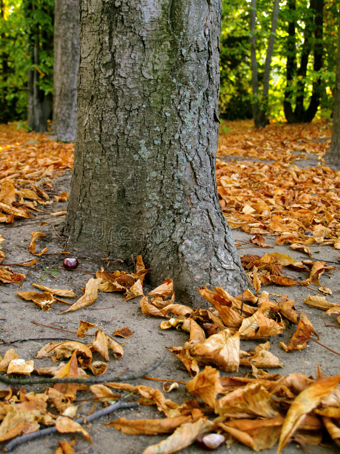Bunte Herbstszene lizenzfreies stockfoto