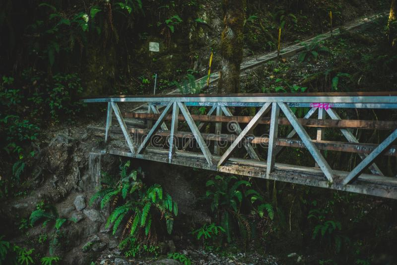 Bunte Holzbrücke und Weg im Dschungel stockbilder