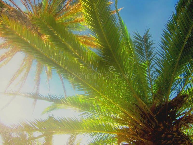 Bunte künstlerische Palmen stockbild