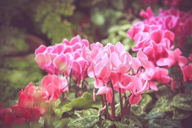 Bunte kleine Blumenblüte im Garten mit Retro- Ton der Weinlese lizenzfreie stockbilder