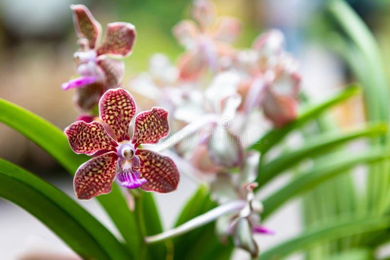 Bunte kopierte Orchideen auf Anzeige lizenzfreie stockfotos
