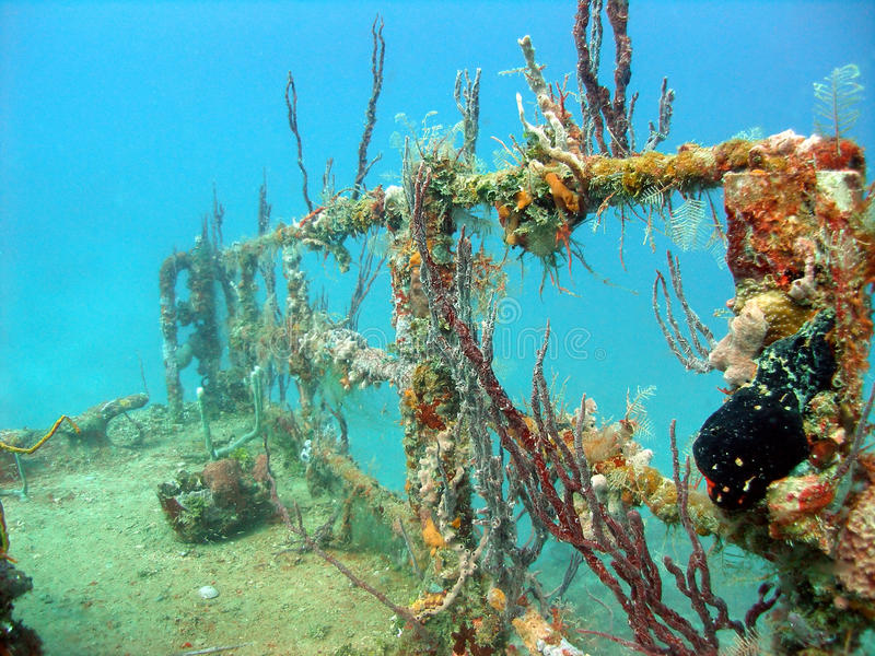 Bunte Korallen, die ein Wrack bewohnen lizenzfreie stockbilder