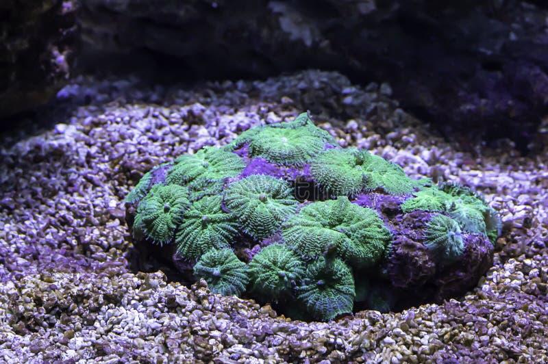 Bunte Korallen unter dem Meer in Thailand stockfoto