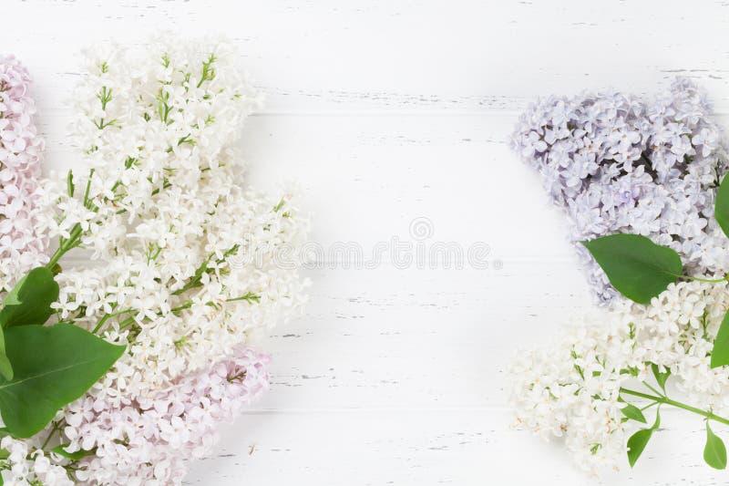 Bunte lila Blumen lizenzfreies stockfoto
