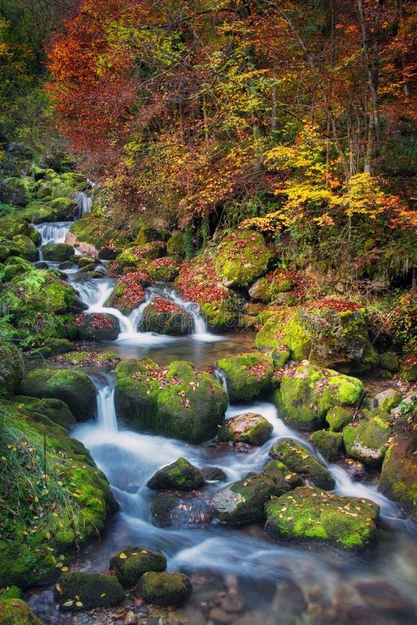 Bunte malerische Herbstlandschaft von Fluss mit kleinen Wasserfällen und moosigen Steinen stockfotos