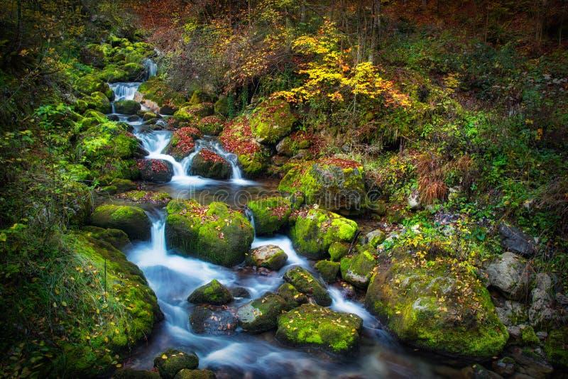 Bunte malerische Herbstlandschaft von Fluss mit kleinen Wasserfällen und moosigen Steinen lizenzfreie stockbilder